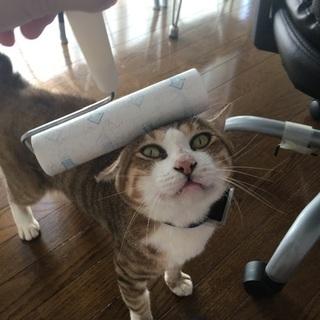ちょっと偉そうな猫