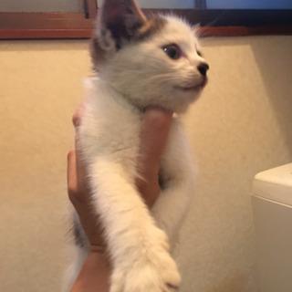生後1ヶ月程の子猫です。