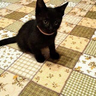 里親様が決まりました。膝で寝たがる黒猫ちゃん。オス。2ヶ月くらい。