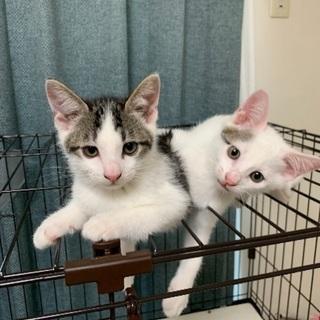 やんちゃな3ヶ月の兄弟子猫