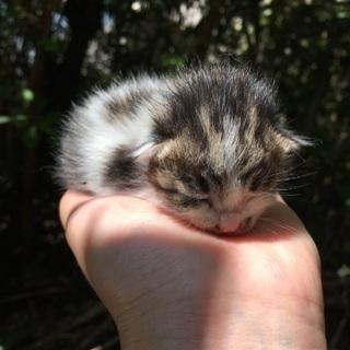 産まれたての子猫