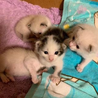 8月26日、子猫が産まれました☆