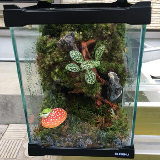 飼育 カエル 初めてのアマガエルの飼育!アマガエルの水槽、餌や価格など、飼い方を解説