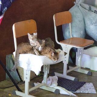 引き取った猫の子猫三匹 - 猫