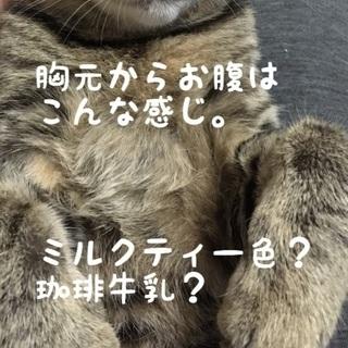☆子猫2匹☆里親募集 ☆