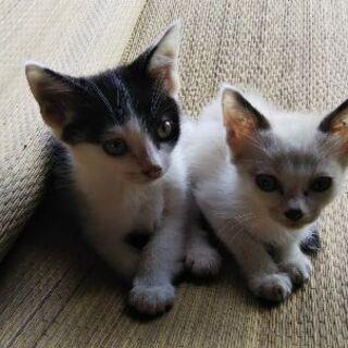 7月生まれの仔猫達です。