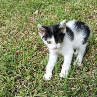 7月生まれの仔猫です。