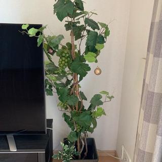無料☆人工観葉植物