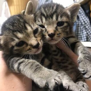生後1カ月、7匹兄妹の子猫ちゃん