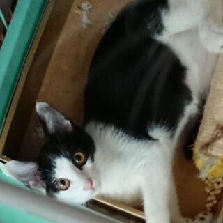 仲良し黒白&白黒姉妹子猫生後5ヶ月