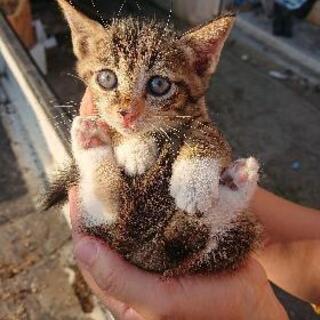 1ヶ月ぐらいの子猫です