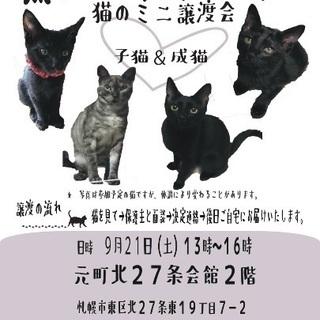 保護猫のミニ譲渡会