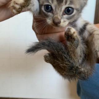 生後1ヶ月子猫里親さん募集 3匹います。 - 猫