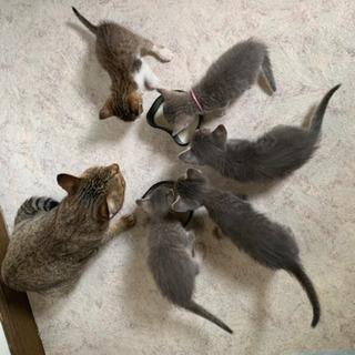 生後1ヶ月子猫里親さん募集 3匹います。