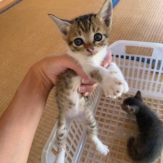 生後1ヶ月子猫里親さん募集 3匹います。 - いわき市