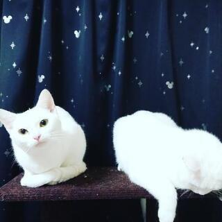猫 写真追加しました!の画像