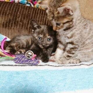 生後1ヶ月の子猫チャン🐈の画像