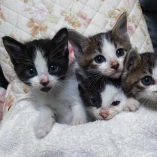 子猫家族にしてください