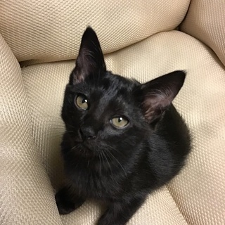可愛い黒猫2匹います、オスとメス