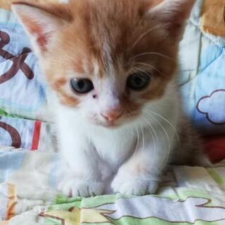 生後1ヶ月程の赤ちゃん猫4匹 - 里親募集