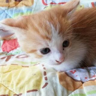 生後1ヶ月程の赤ちゃん猫4匹 - 猫