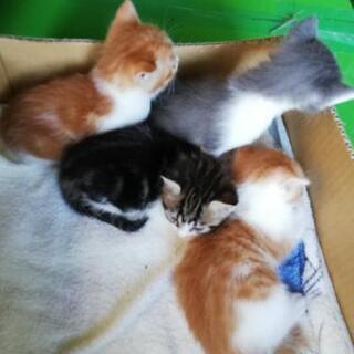 生後1ヶ月程の赤ちゃん猫4匹