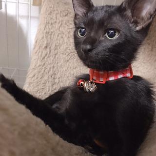 黒猫2ヶ月 💛 モコちゃん