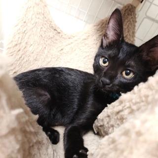 黒猫2ヶ月 💙 ロコちゃん