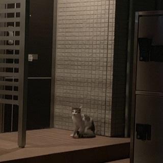 ネコの飼い主を探しています。