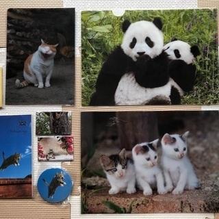 動物(ほとんど猫)の癒し文房具