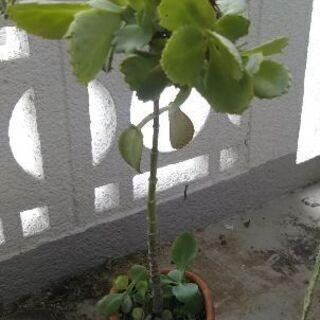 多肉植物 3