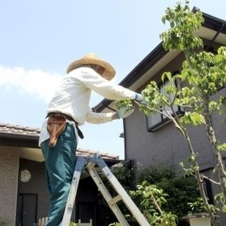 お庭の剪定・伐採いたします。ハイハイネットにお任せください。