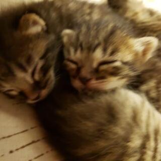 生後1ヶ月くらいの、子猫5匹ちゃんです!