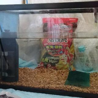 【金魚飼育一式】水槽 ろ過機 麦飯石 活性炭 乳酸菌餌 一式