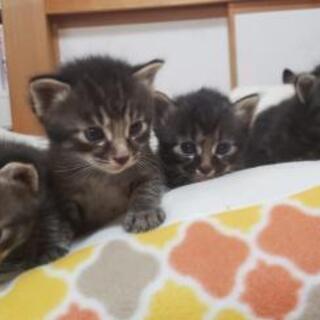 生後4週の子猫たち