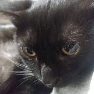 里親様が決まりました。幸運を呼ぶ黒猫×鍵しっぽのねこちゃん。