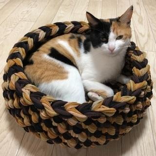 猫ちゃん籠
