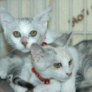 かわいいパステルな三毛猫姉妹
