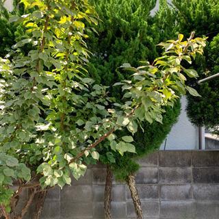 植木「松」4、「梅」1