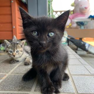 生後1ヶ月弱、黒猫