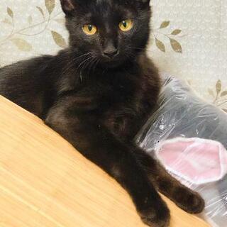 めちゃくちゃ優しい❤️黒猫ちゃんの男の子です。