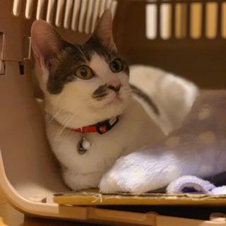 獣医さんにも褒められるいい子です - 猫