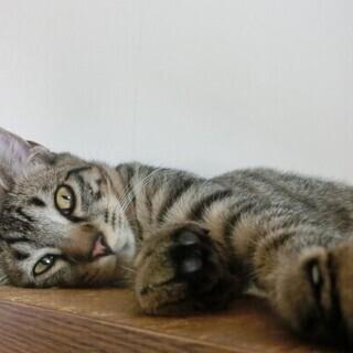 可愛い 癒し系の猫ちゃんです。