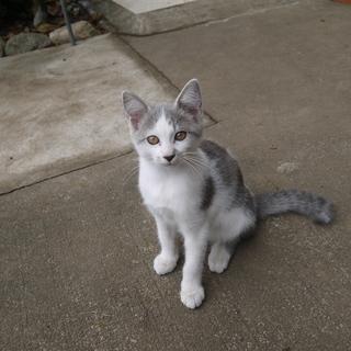 生後2~3か月の可愛い子猫です。どちら様か里親お願いします。