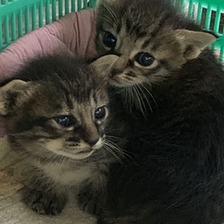 仲良し姉妹猫を家族に迎えてください