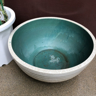 睡蓮鉢その1