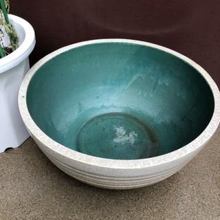 睡蓮鉢その2