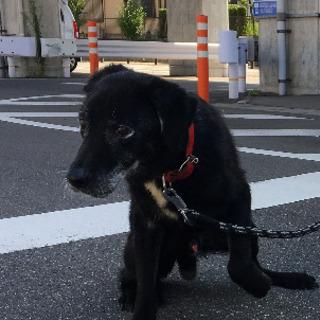 優しい保護犬・おじいちゃんU^q^U