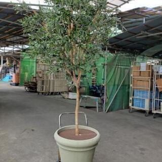 造花(観葉植物)オリーブの木