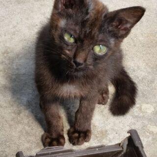黒子猫ちゃんの家族になって下さい